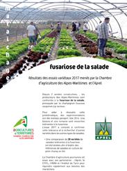Fusariose de la salade bilan des essais vari taux 2017 - Chambre d agriculture des alpes maritimes ...