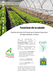 Maraichage fusariose de la salade r sultats des essais - Chambre d agriculture des alpes maritimes ...