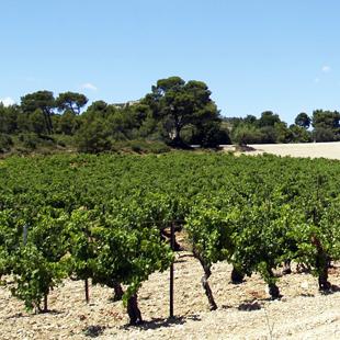 Viticulture bulletins info viti gel vigne 2017 - Chambre d agriculture des alpes maritimes ...